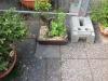 Bonsai Café NL 3 mei 23