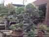 Bonsai Café NL 3 mei 32