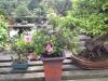 Bonsai Café NL 3 mei 33