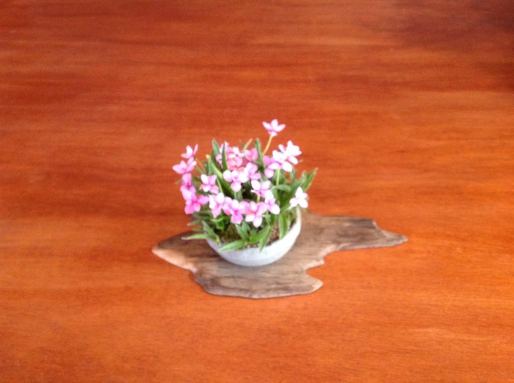Bonsai Café NL 3 mei 10