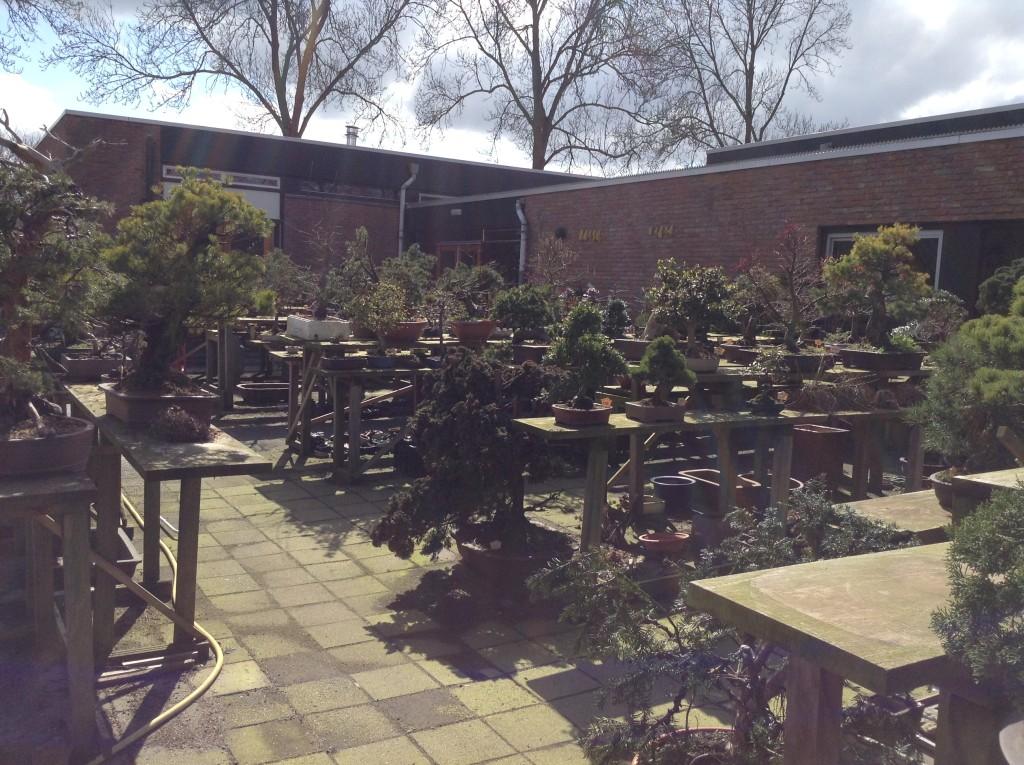 Bonsai Café NL 4 april: Zonnige werkmiddag - Bonsai Café NLBonsai ...: https://bonsaicafe.nl/bonsai-cafe-nl-4-april-zonnige-werkmiddag