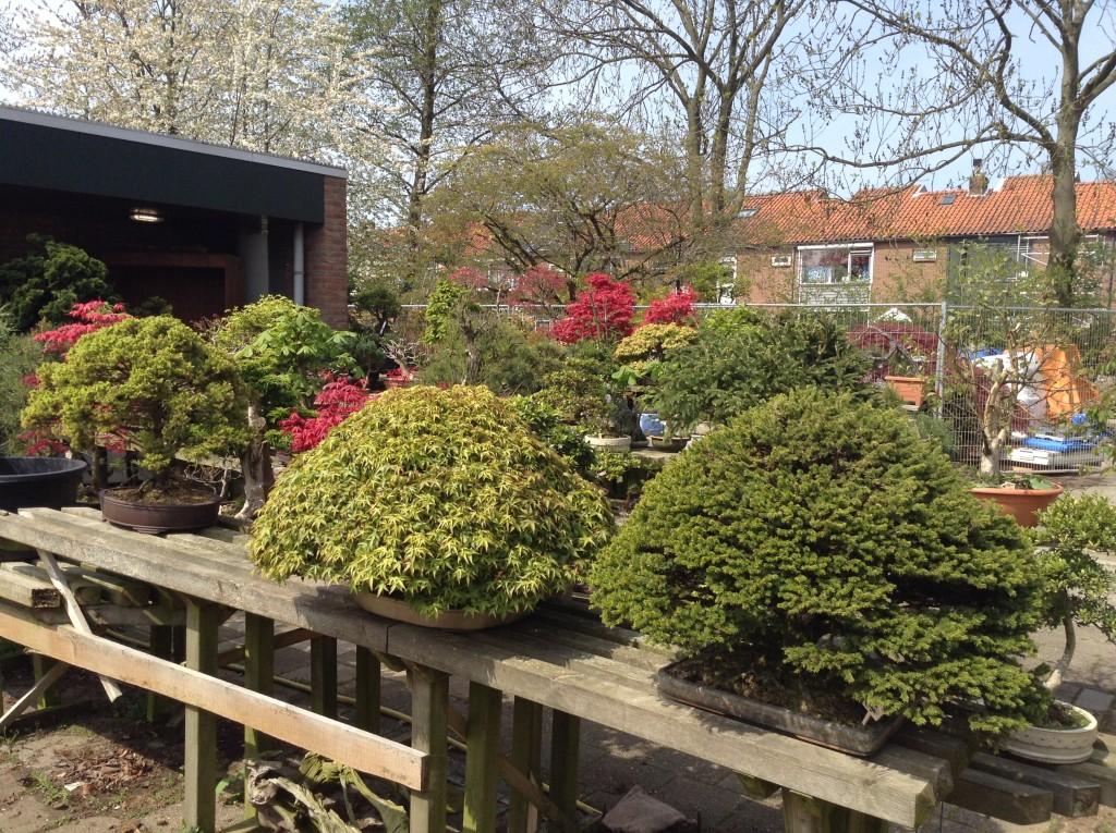 Bonsai Café NL 2 mei - 01