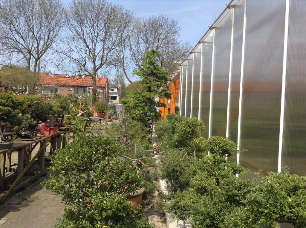 Bonsai Café NL 2 mei - 33
