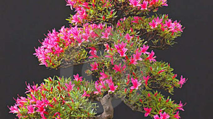 De vier bonsaigetijden