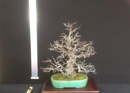 De vier bonsaigetijden 7 november