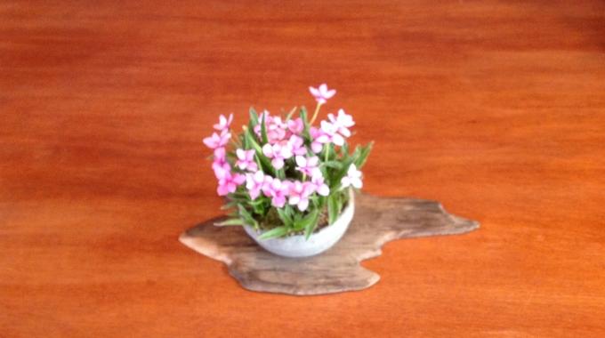 Accentplantjes maken bij Bonsai Café NL
