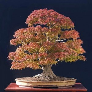 bonsai-seasons-fall