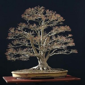 bonsai-seasons-winter