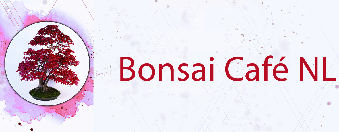 Bonsai Café NL